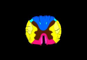 脊椎の基本15
