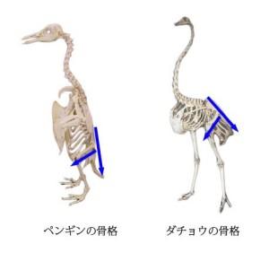 脊椎の基本04