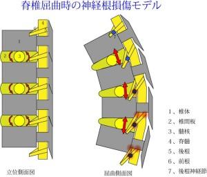 脊椎の基本02