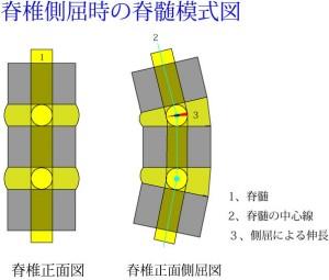 脊椎の基本03