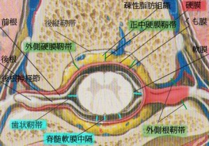 脊椎の基本30