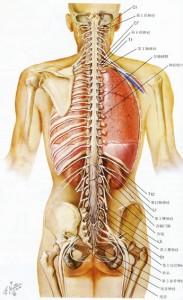 脊髄スケッチ